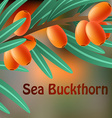 Orange juicy therapeutic sea-buckthorn on a branch vector image vector image