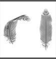 silhouette feather pen isolated bird design vector image vector image