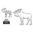 cut elk set poster butcher diagram - desert vector image