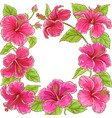 hibiscus frame vector image vector image