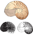 oceanic isolation shell vector image vector image