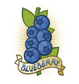blueberries label vector image vector image