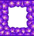 purple morning glory flower border2 vector image