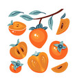 set fresh persimmon collection different vector image vector image