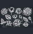 set hand drawn chalk roses vector image