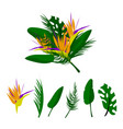 tropical floral set vector image vector image