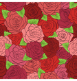 seamless pattern red roses with green leaves vector image