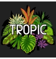 Background with stylized tropical plants and vector image vector image