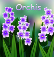 Blooming flower Military orchid plant purple vector image vector image