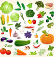 Collection of isolated ripe vegetables herbs and vector image vector image
