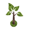 Isolated tree with leaves design vector image vector image