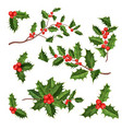realistic holly mistletoe leaves set vector image vector image