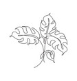 single continuous line drawing monstera leaf vector image