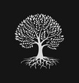 tree silhouette with root logo design template vector image