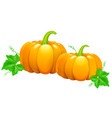 two beautiful pumpkins vector image vector image