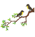 Two song birds on spring branch vector image