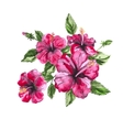 Hibiscus watercolor painting Exotic flower vector image