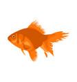 aquarium fish silhouette colorful vector image vector image
