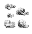 Hand drawn set of cabbage sketch vector image vector image