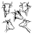 isolated cow head portraits cattle faces vector image vector image