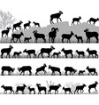 silhouettes of bighorn sheeps rams and lambs vector image vector image