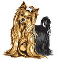 yorkshire terrier vector image