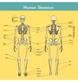 Human skeleton front and rear view with vector image