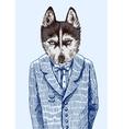 Husky in jacket vector image