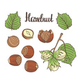 Set of detailed hand drawn hazelnuts isolated on vector image vector image