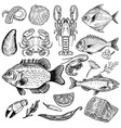 set of hand drawn seafood isolated on white vector image vector image
