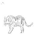 tiger drawing on white background vector image vector image