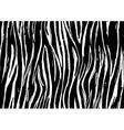 zebra print seamless background pattern black vector image vector image