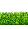 grass on a meadow vector image