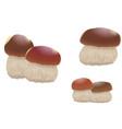 mushroom orange cap boletus isolated on white vector image