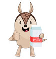 armadillo holding milk on white background vector image vector image