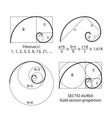 Golden fibonacci ratio spirals gold section vector image