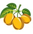 Harvesting symbol single fruit isolated Three vector image vector image