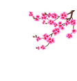 sakura the curved branch of a blossoming cherry vector image vector image
