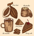 hand drawn cocoa beans cocoa pod chocolate cake vector image