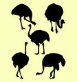 ostrich birds animal silhouette vector image