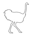 ostrich running of black contour curves on white vector image