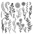 set hand drawn plant herb flowers vector image vector image