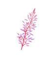 thorny shrub with pink leaves red berries vector image vector image