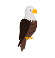eagle large bird of prey cartoon isolated on white vector image