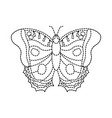 top view of beautiful monarch butterfly vector image