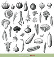 vegetables collection hand draw engraving vintage vector image