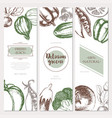 vegetables - color hand drawn square flyers set vector image vector image