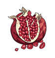 cartoon image of pomegranate vector image vector image