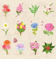 cozy collection with different bouquet of lovely vector image vector image