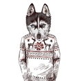 Husky in knitted sweater vector image vector image